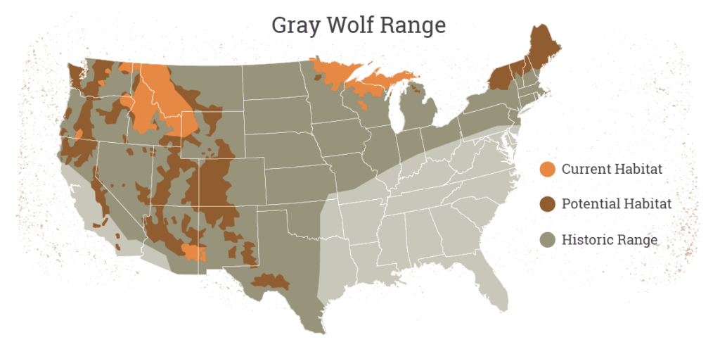 Grey Wolf Range Map